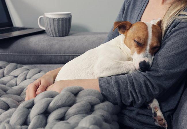 Cozy home, woman covered with warm blanket watching movie, hugging sleeping dog.